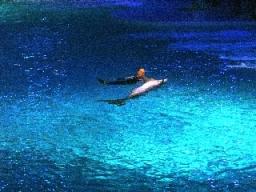 Delfinerna på Kolmården